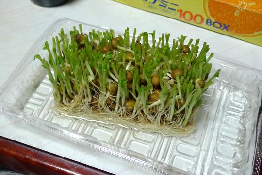 えんどう豆のスプラウトの残り