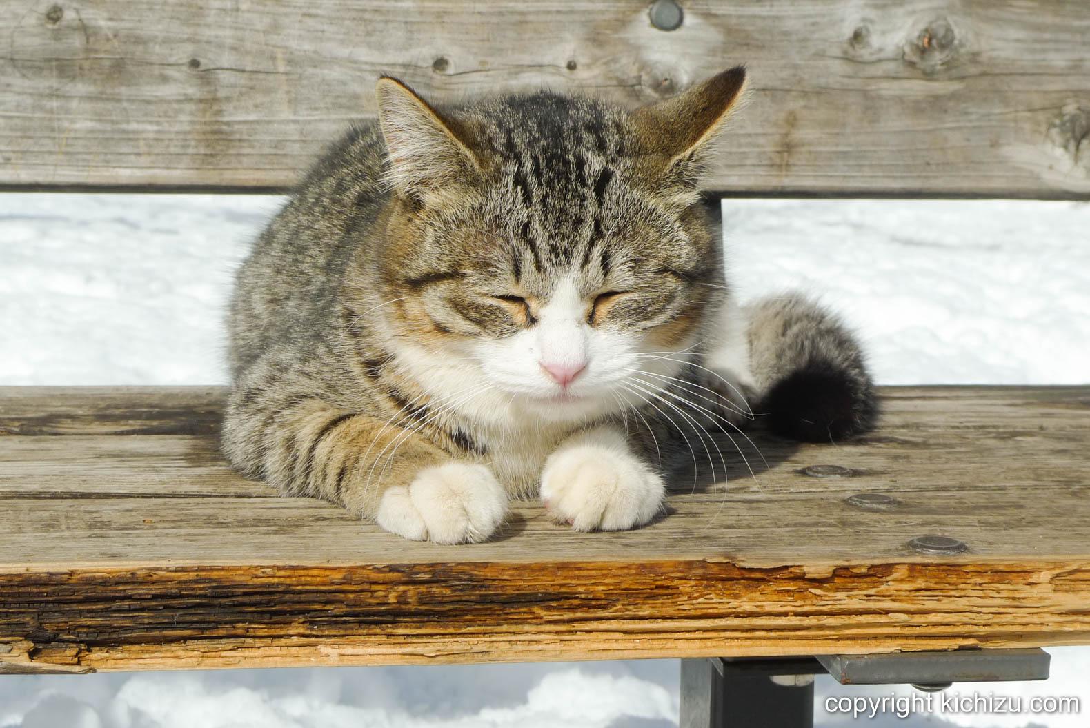 雪の中日向ぼっこの猫