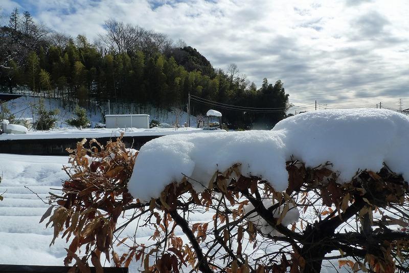 木に乗る雪