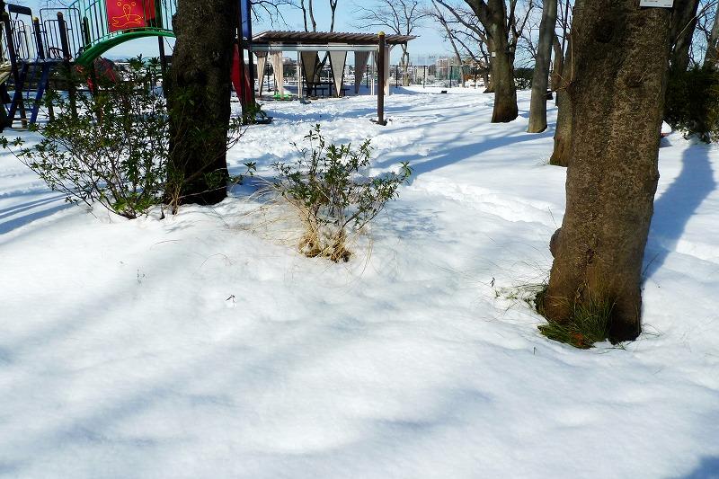 跡が付いていない雪