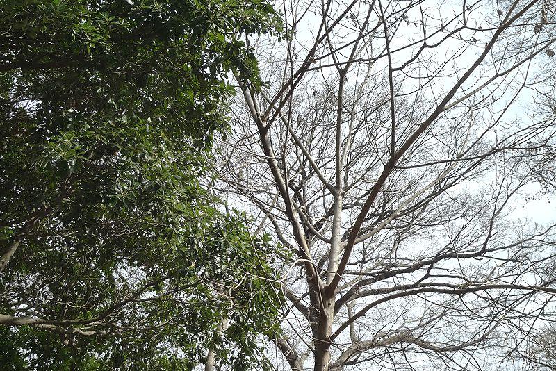 木に止まった鷹
