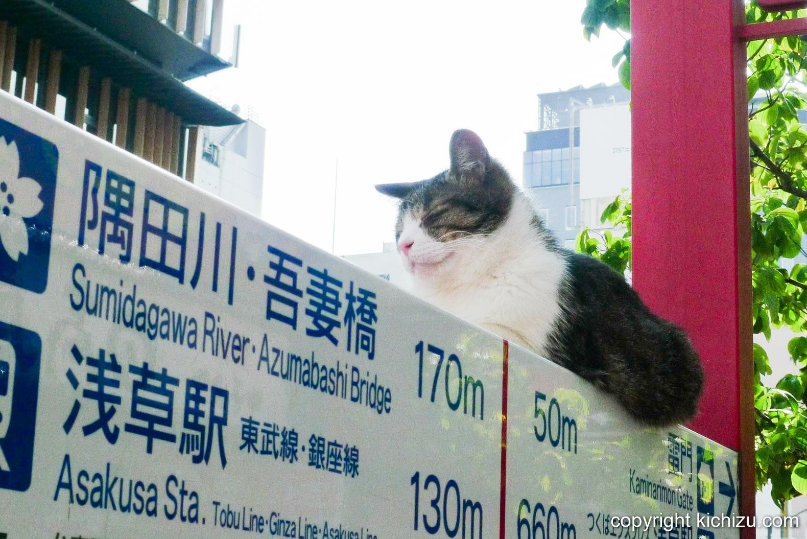 浅草の看板ネコ