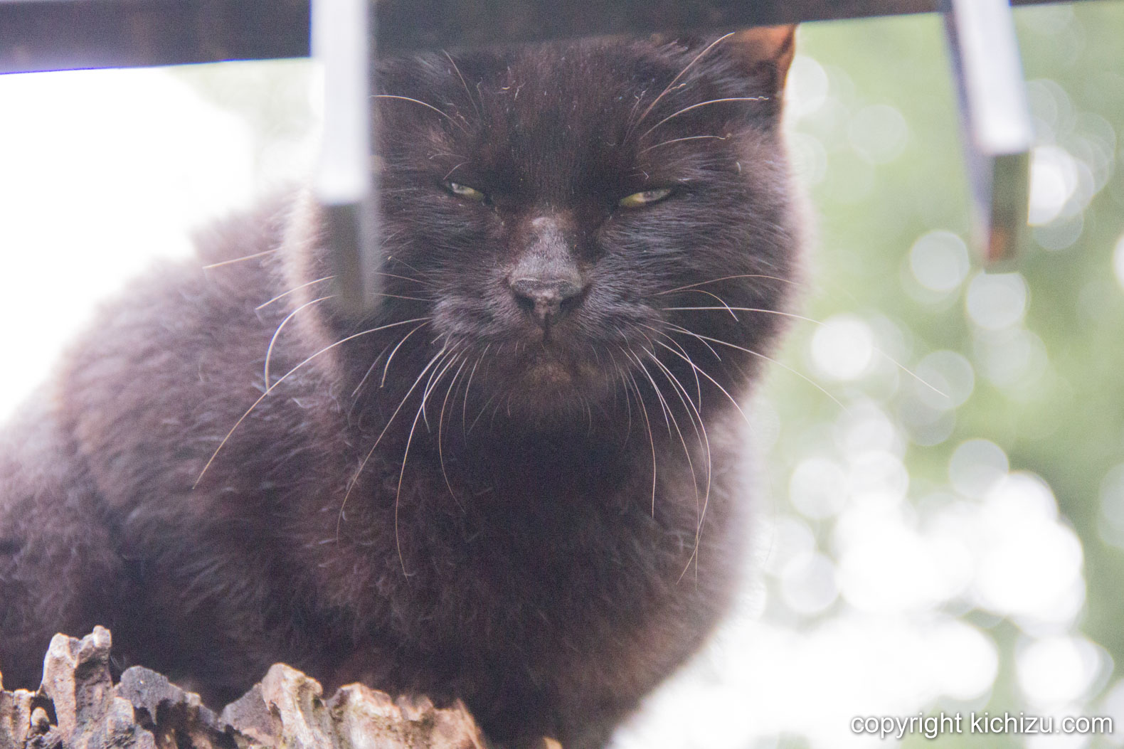 門の上から見下ろす猫