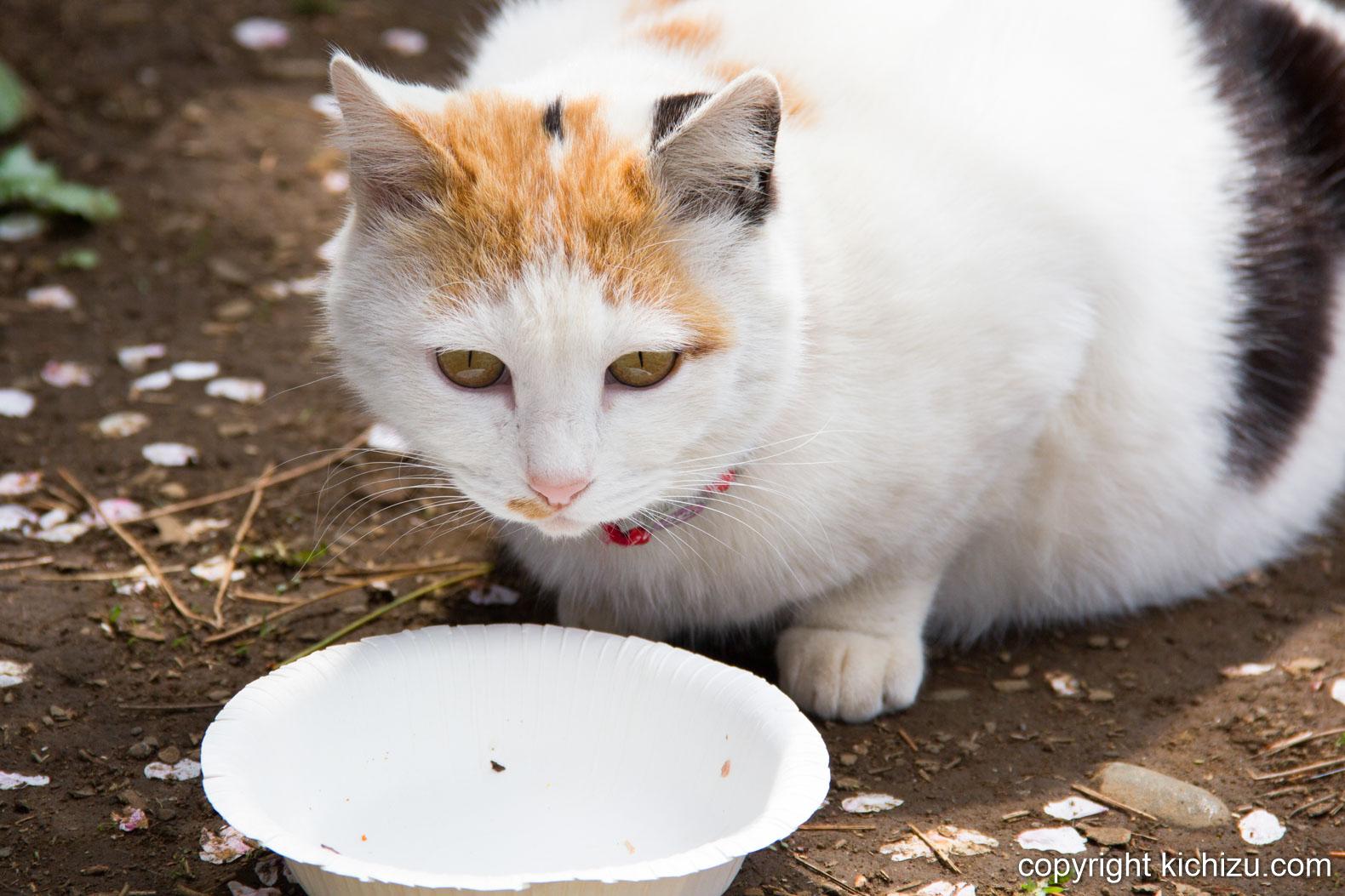 餌がなくなった猫
